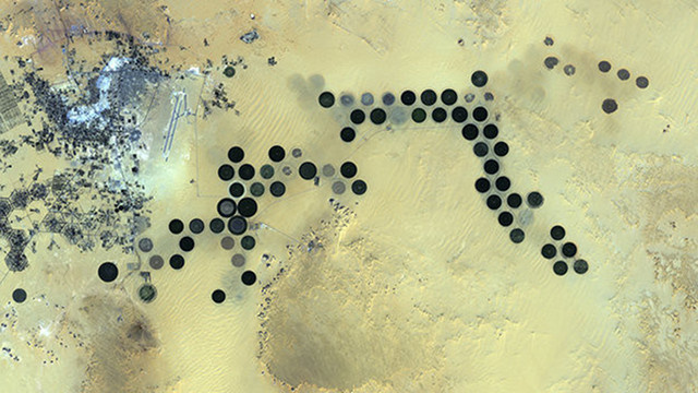 What Does This Saharan Oasis Remind You Of?
