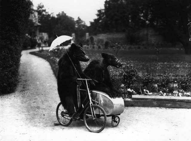 Strange Historic Photos Of Intelligent Animals