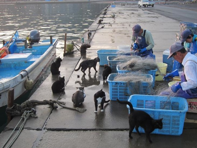 Cats Rule These Japanese Islands