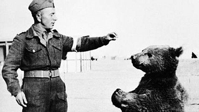 This Bear Was an Official Member of Poland's WWII Army