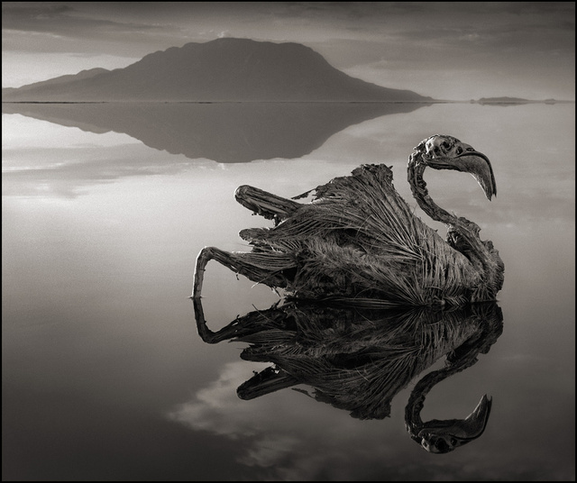 The Lake that Turns Animals to Stone, iPhone 5S Sensor Snafu, and More