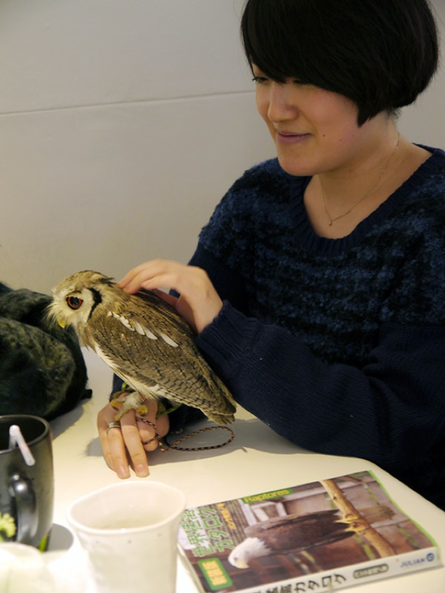 Who Thinks Japan's Owl Cafes Are a Hoot?