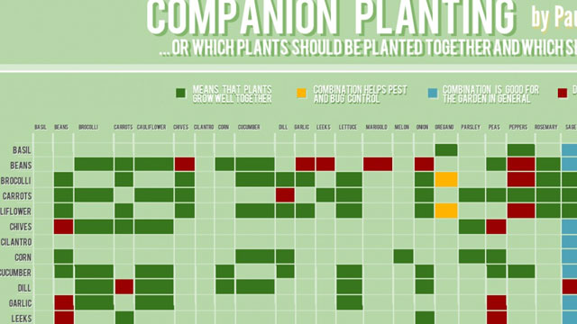 This Chart Shows Which Plants Grow Well Together And