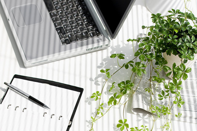 Want to Create a More Productive Workspace? Buy Some Desk Plants