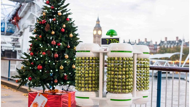 This Christmas Tree Is Lit By 1000 Brussels Sprouts