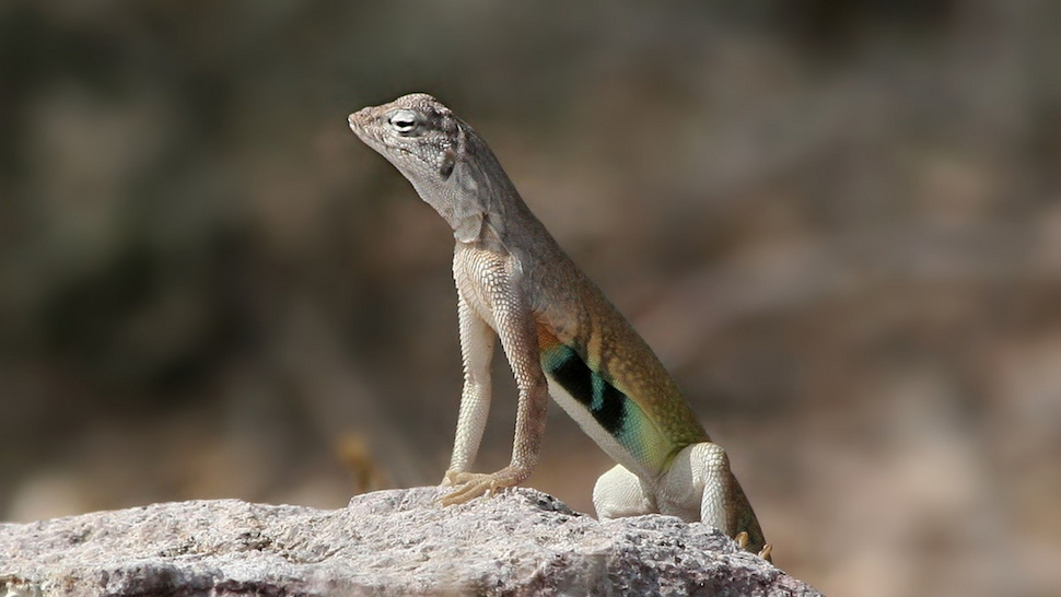 This New Polymer Regenerates Large Parts of Itself, Like Lizards Do