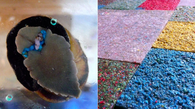 These Colorful Floor Tiles Were Made From Snail Poop