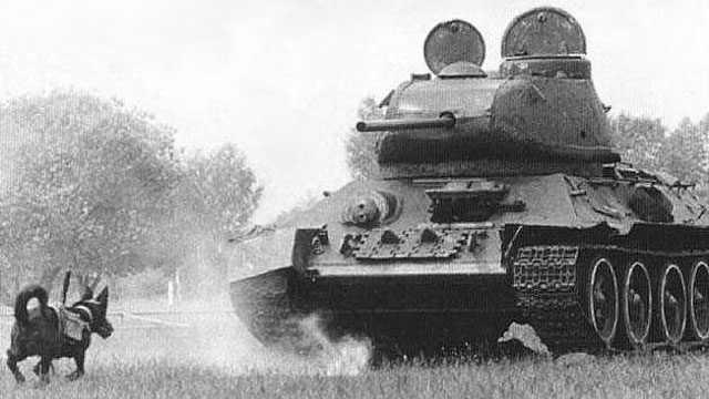 Exploding Dogs Were Used as Mobile Anti-Tank Mines During World War II