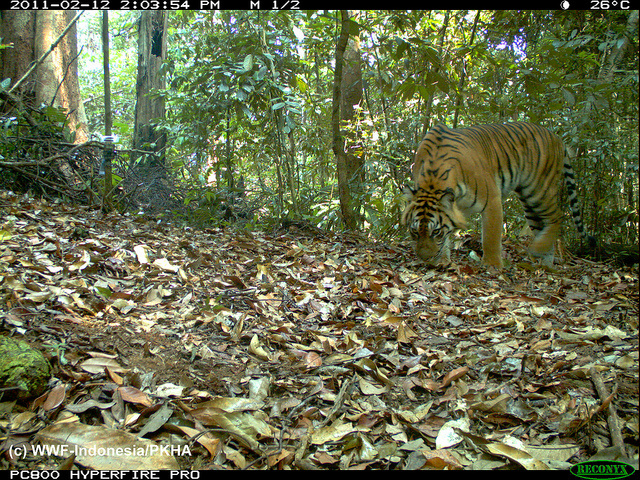 The Very Best Camera Trap Photography