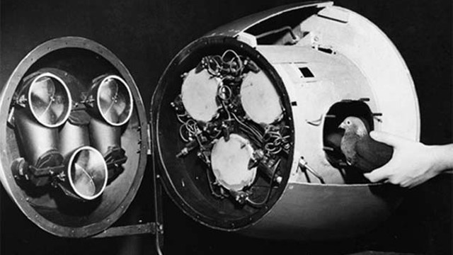 The Pigeon-Guided Missiles and Bat Bombs of World War II