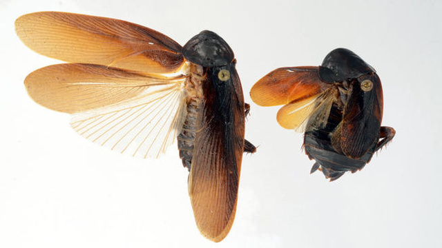 Is New York about to be invaded by ice-loving cockroaches?
