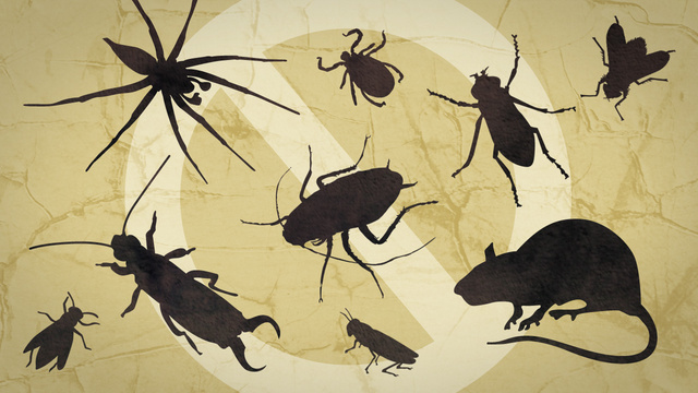 How to Manage Your Winter Pest Problem
