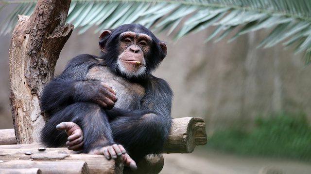 ​Experts Gather at Yale to Discuss Whether Animals Are People