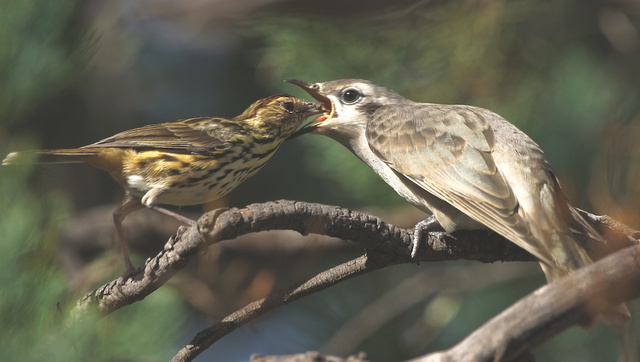 Birds offer insight into the evolution of extended families