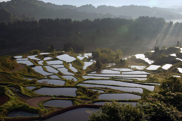 This Gorgeous Stained Glass Landscape Is Actually a Rice Field