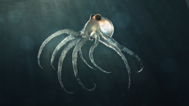 Not even the deepest sea creatures will escape climate change