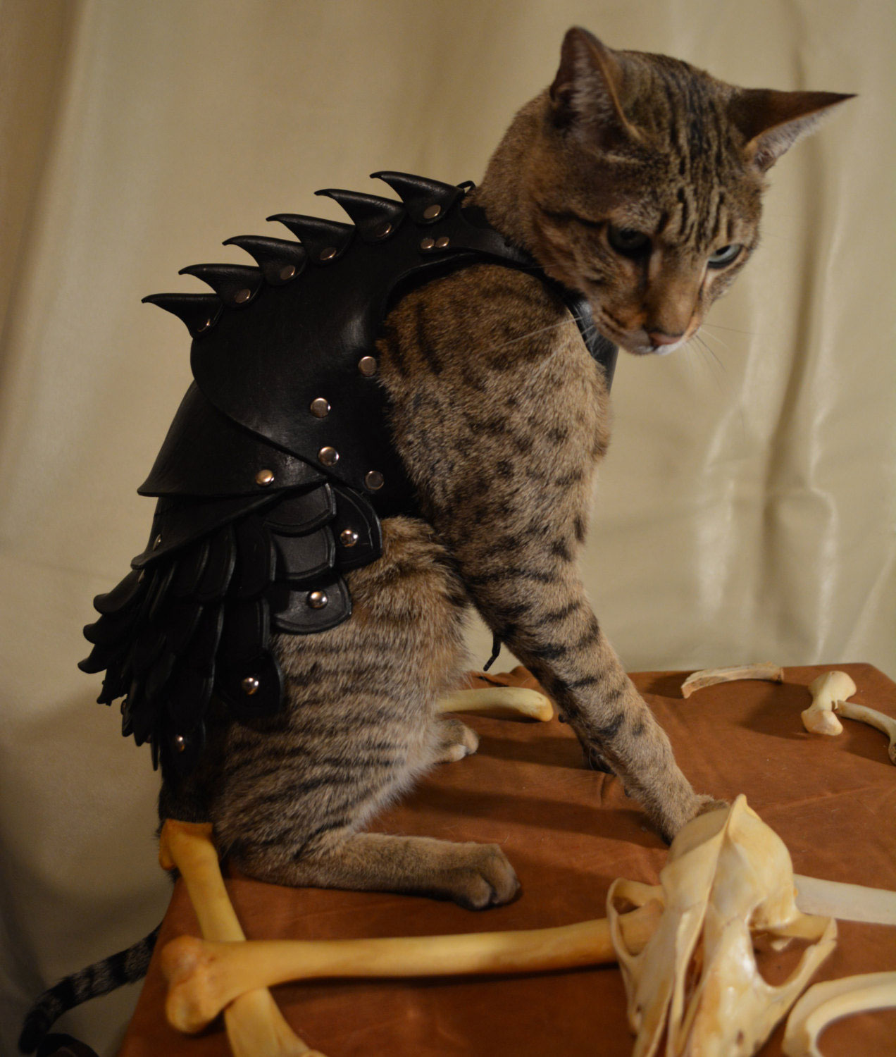 No Cat Is Complete Without A Set Of Leather Battle Armour