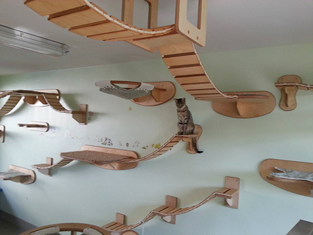This wall furniture is the coolest thing your cat will see all day