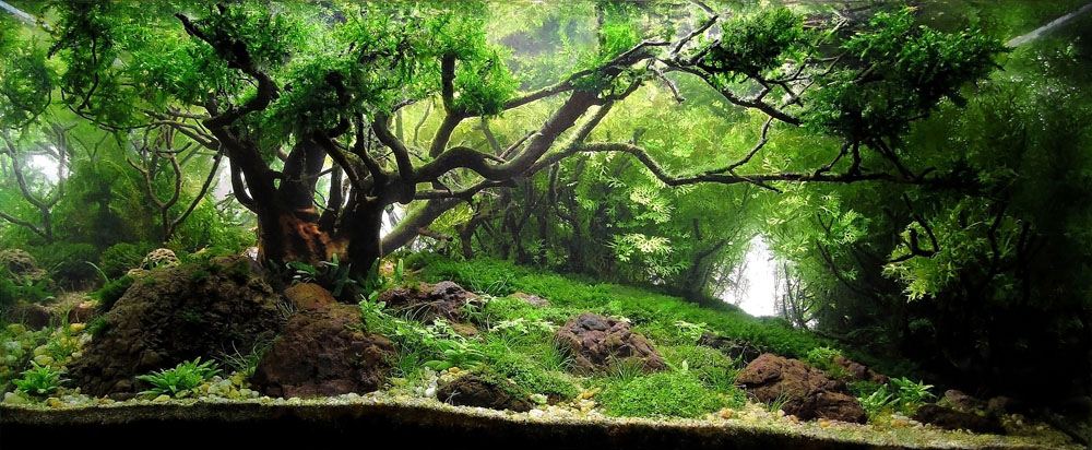 These beautiful natural landscapes are actually aquariums Aquarium landscape