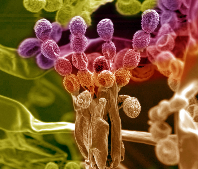 27 Amazing Images From the Depths of Scientific Labs