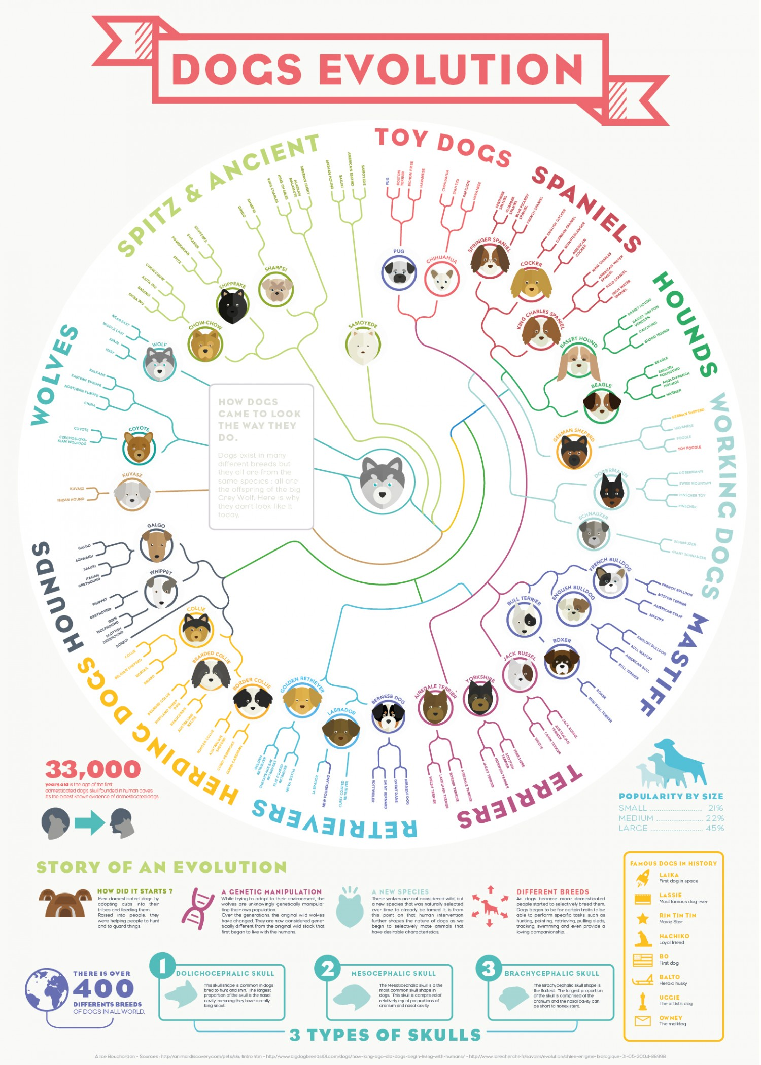 history and evolution of dogs He ask a researcher involved in the new study, love dalén of the swedish museum of natural history in stockholm, what the new date means for how the bond between humans and dogs formed.