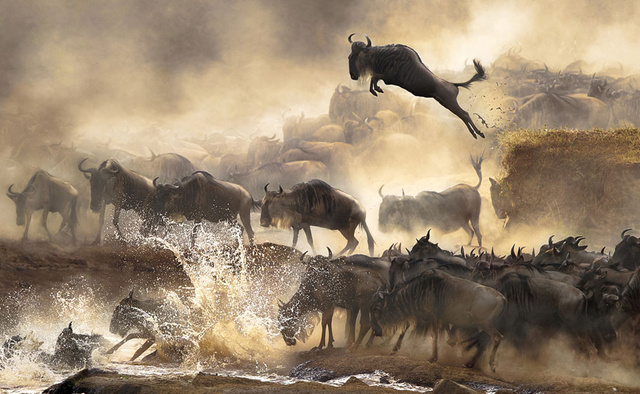 The winners of the Sony World Photography Awards are just stunning