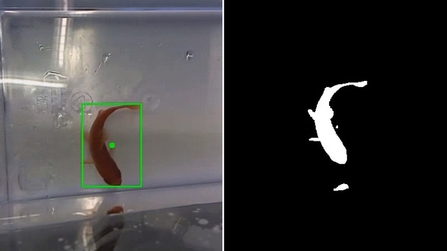 This Fish Is Driving Its Own Motorized Aquarium