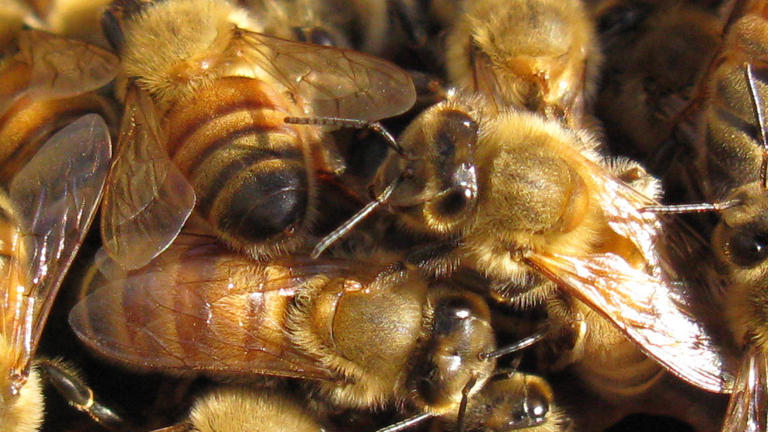 Bees To Humans: We'll Make Hives Out Of Your Plastic Rubbish