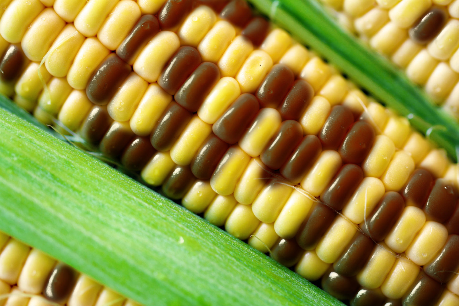 What Are GMO Foods, And Are They OK To Eat?