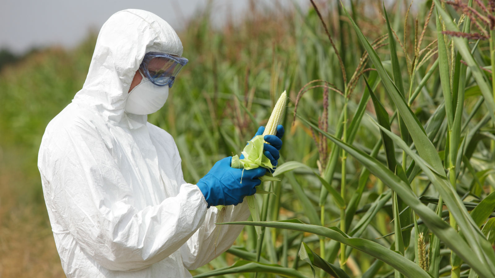 Giz Explains: What Are GMO Foods, And Are They OK To Eat?