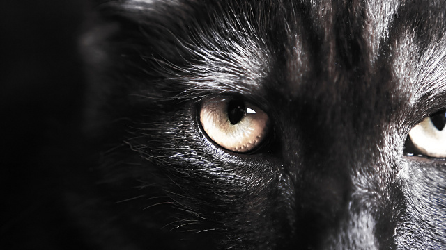 Superpower vision lets cats and dogs see in ultraviolet