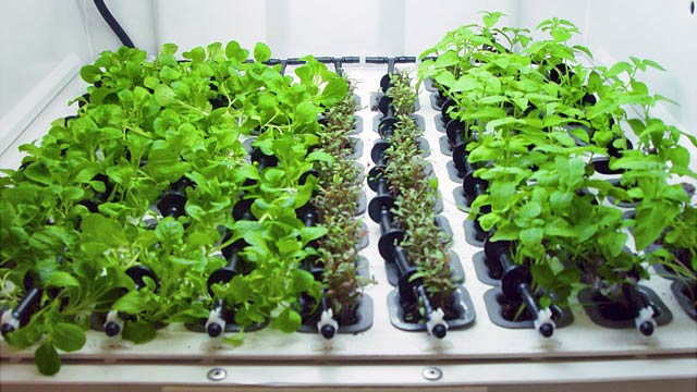 Hydroponic Garden Blends Into Your Kitchen For Year Round Herbs