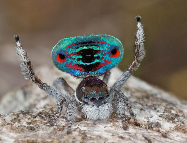 These Spiders Are Frightening and Beautiful At the Same Time