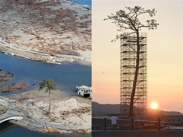 Japan Turned the One Surviving Tsunami Tree Into a Gigantic Sculpture