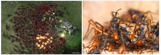 Zerg Rushes, Suicide Attacks and Splash Damage: How Real Insect Warfare is Similar to StarCraft